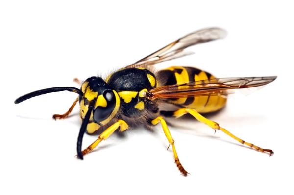 Mon enfant a été Piqué par un Insecte - 1