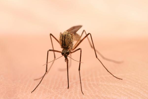 Mon enfant a été Piqué par un Insecte - 2