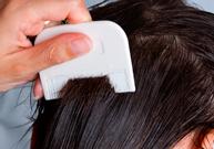 poux, cheveux, démangeaison du cuir chevelu,  traitement des poux, insecticide, peigne à poux