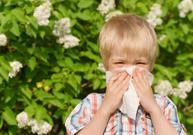 rhume des foins, allergie, pollen, éternuement, spray nasal